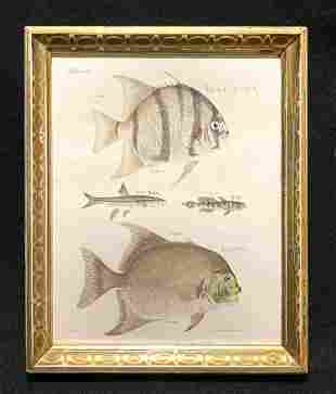 C1840 hand colored fish engraving with inked names to
