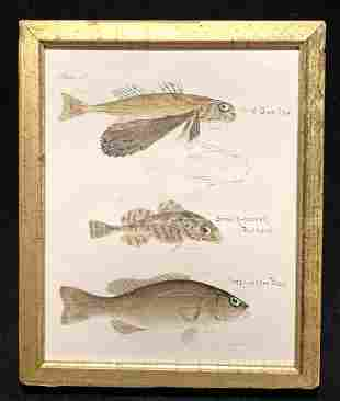 C1840 hand colored fish engraving with inked in names