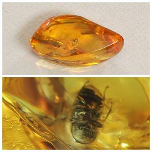Baltic amber with inclusion beetle (Coleoptera),