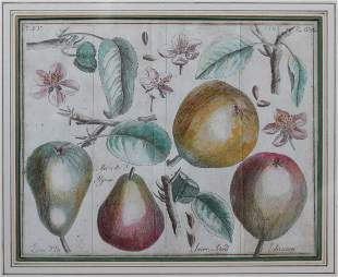 18th Century. Antique Copperplate Engravings. Botanical