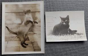 2 Antique Images of Cats Siamese & All Black