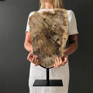 Large Petrified Wood Slice on Stand