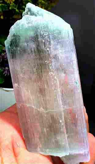 Bicolor Kunzite Crystal , Natural Kunzite Specimen from