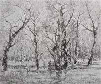 Pencil painting Forest landscape Peter Tovpev
