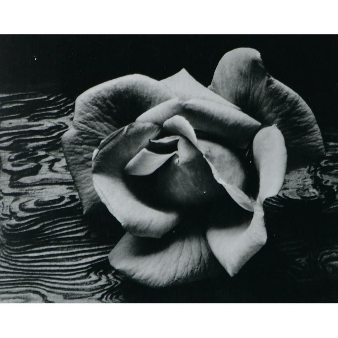 ANSEL ADAMS - Rose and Driftwood