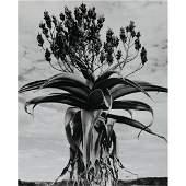 GIAN PAOLO BARBIERI - Amboasary, A Solitar Aloe in