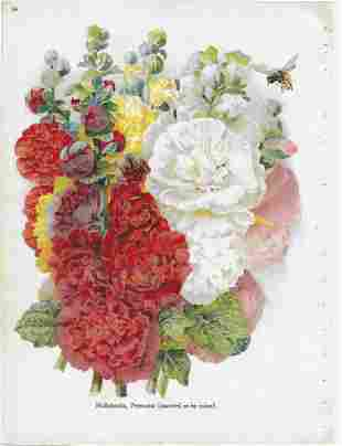 "Alois Lunzer-""Hollyhocks"" botanical print from nursery"