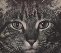 FRED G. KORTH - Cat, 1930's