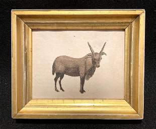1786 Hand Colored Copperplate Engraving Of A Goat