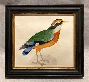 C1860 Beautiful Bird Watercolor