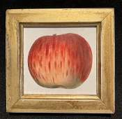 1844 Hand Colored Red Apple Engraving