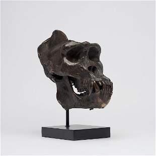 Male Western Lowland Gorilla Skull in Polished Bronze