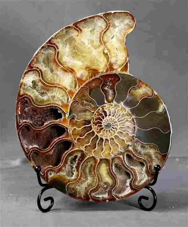 Big sized finest quality Ammonite slice with cristal
