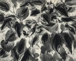 PAUL CAPONIGRO - Negative Print, Brewster, NY, 1963
