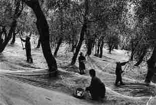 GIANNI BERENGO GARDIN - Harvesting Olives, Italy