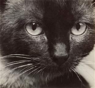 ANDRE KERTESZ - Siamese Cat, Paris, 1928