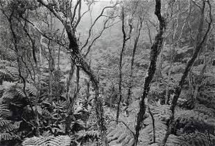 ANSEL ADAMS - Fern Forest, Kilauea, Hawaii, 1956