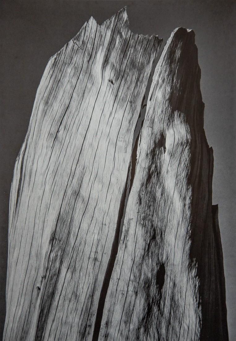 ANSEL ADAMS - The White Stump, Yosemite, 1936