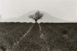 MARTINE FRANCK - Lavender Field, France, 1976