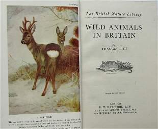 Wild Animals In Britain