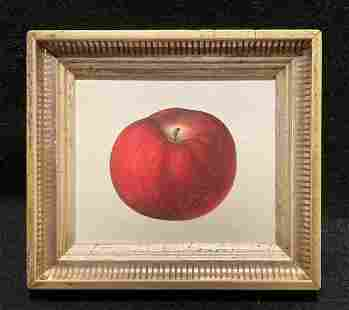 1844 beautiful red apple hand colored engraving