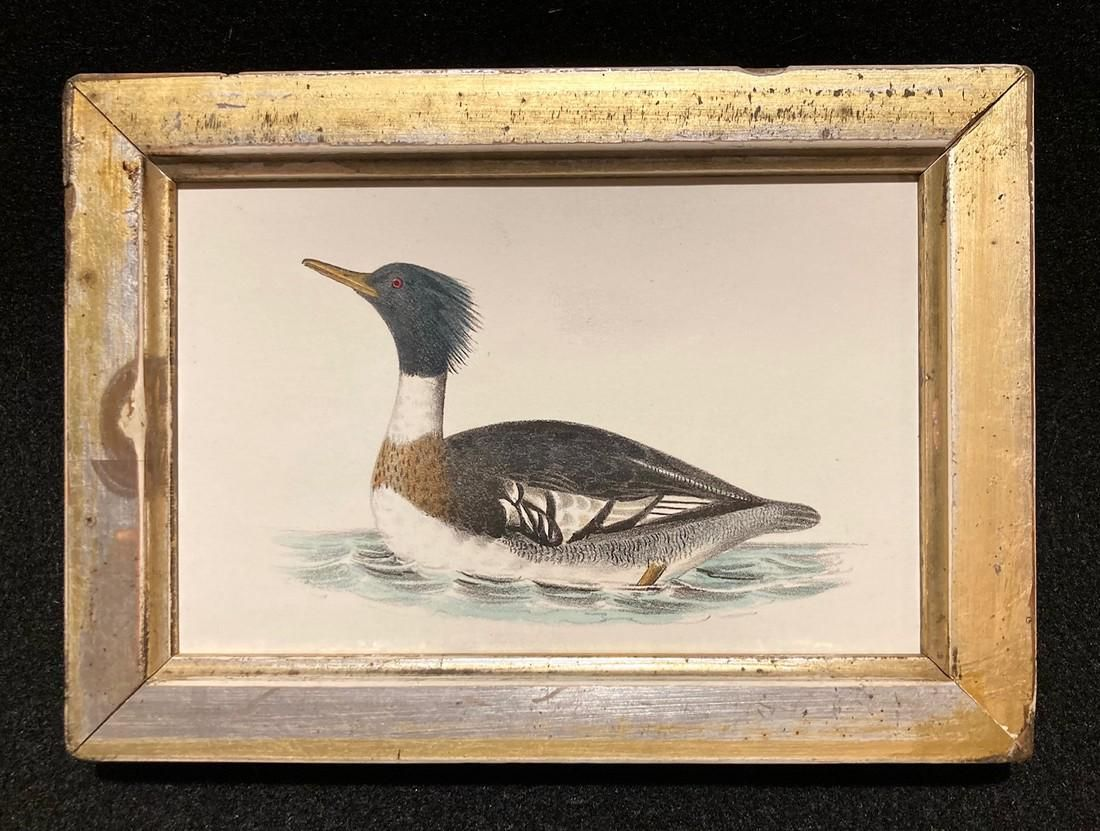 C1840 hand colored duck engraving