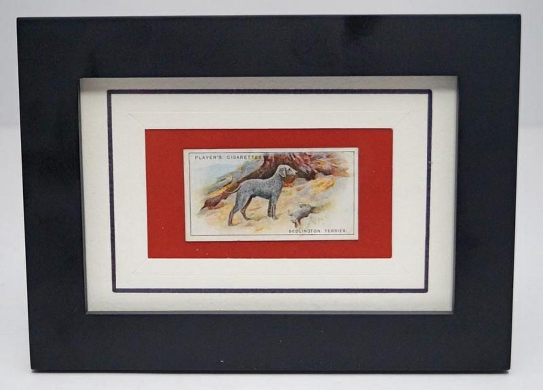 Terrier Dog Advertising Card 1925