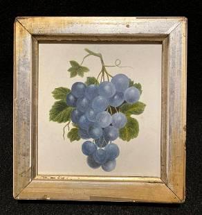 C1840 original watercolor of blue grapes