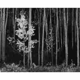 ANSEL ADAMS - Aspens, New Mexico
