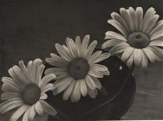OTTO RHEINLANDER -  Daisys, 1930's
