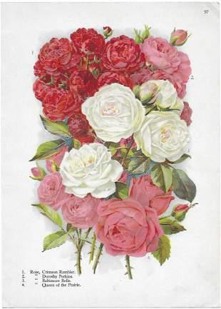Alois Lunzer: Roses - four varieties