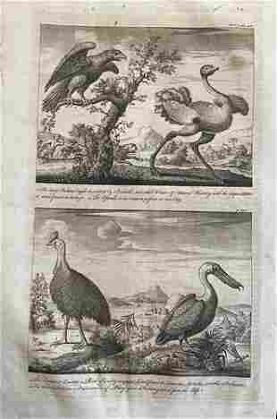 Collection of birds from voyages from Harris's atlas