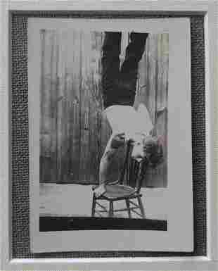 1910's Young Athletic Man doing a Chair Handstand