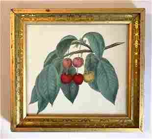 1844 hand colored cherries engraving