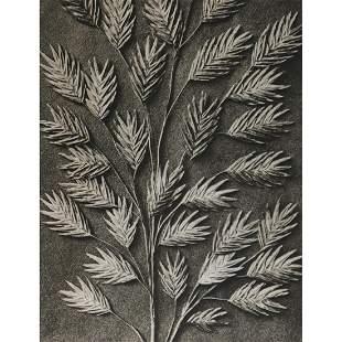 KARL BLOSSFELDT - Uniola latifolia