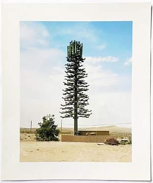 Robert Voit: New Trees (Scottsdale AZ 2006) 2011