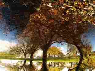 Jonathan Dy: Trout Lake - Signed - Ed.1/15