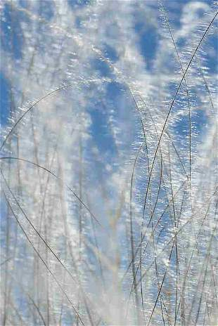 Annalaura Pretaroli: Summer's breeze, UK - Signed -