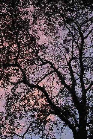 Annalaura Pretaroli: Twilight, UK- Signed - Ed.1/15
