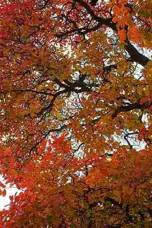 Annalaura Pretaroli: Autumn foliage, UK- Signed -