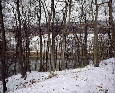 Marco Bulgarelli: Trees, Germany - Signed - Ed.2/15
