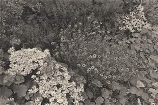 LEE FRIEDLANDER - Giverny, France, 1978