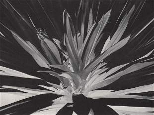 Y. WATANABE - Orchid, Negative Photo