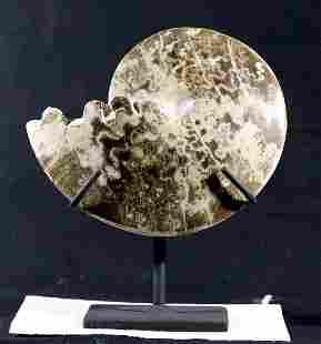 Decorative Ammonite On Stand : Choffaticeras Segne