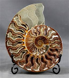Finest quality ammonite slice with cristal clusters on