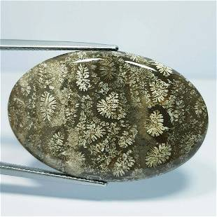 38.30 ct Natural Fossil Coral