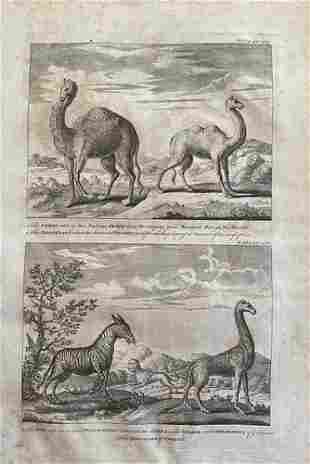 Travel accounts of Asian camels & African animals such