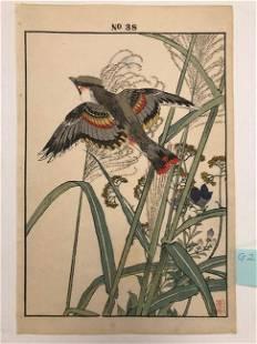 Imao Keinen, Orange and gray bird fling over plants