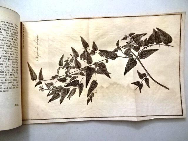 1771 Essays on Jasmine Engraving