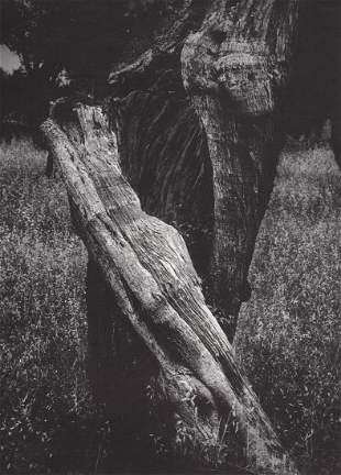 JEAN DIEUZAIDE - Pieta, 1969